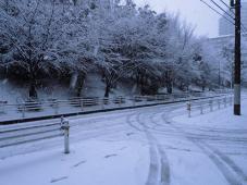今年最初の雪