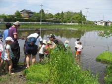 稲の成長はどのくらい?