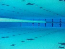 プールで泳ぎたい!