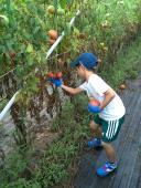 サマーキャンプで収穫!