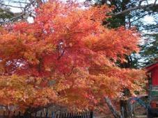 秋といえば・・・