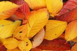 秋ですね〜